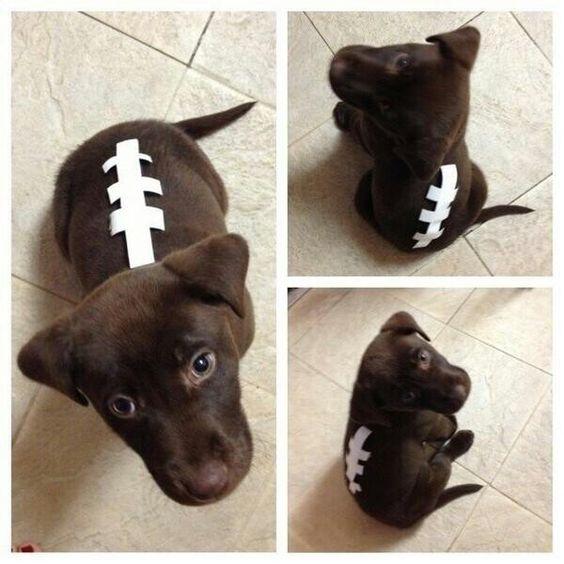 cute-labrador-puppy