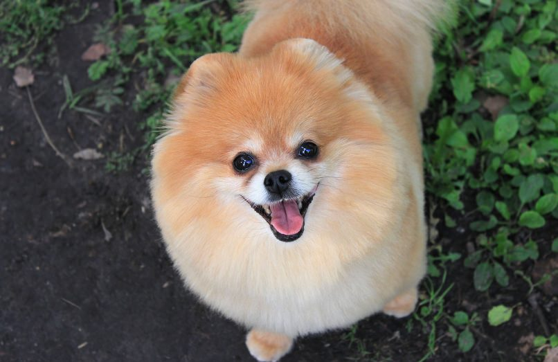 Cute Dogs And Their Breed