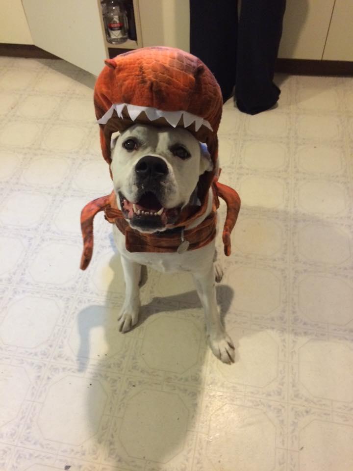 dinosaurs-boxer-dog-costume