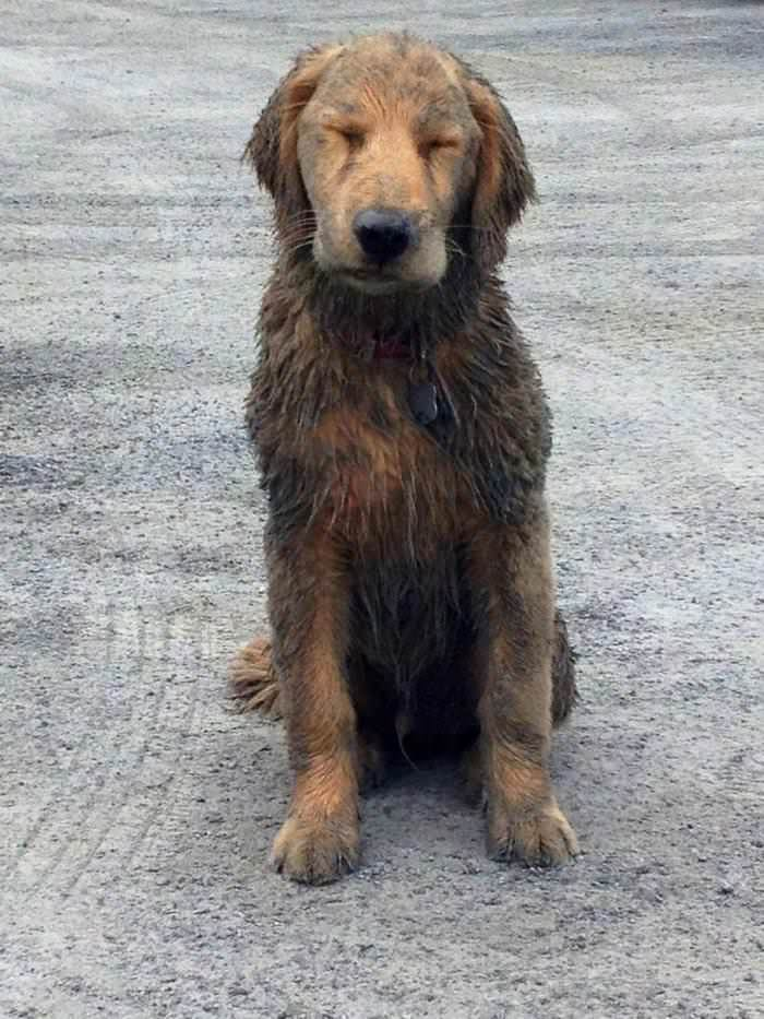 dirty-dog
