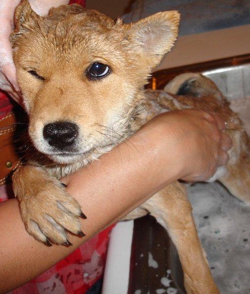 dog-bath-time