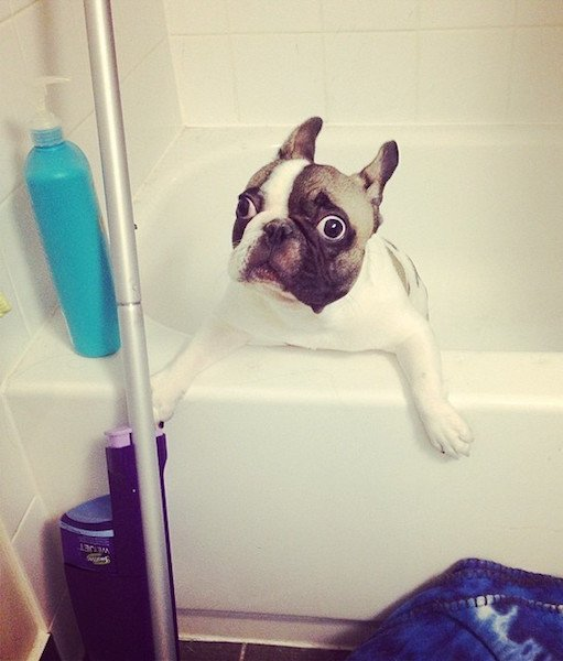 dog-hates-bath