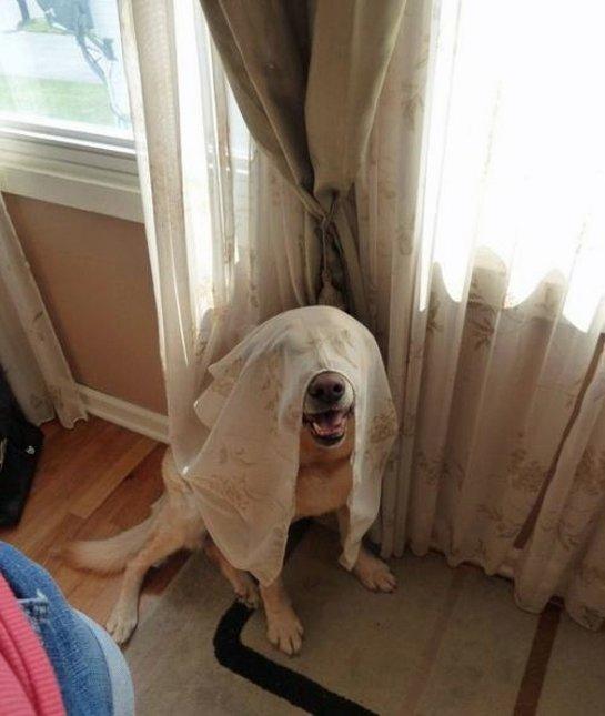 dog-hiding-room