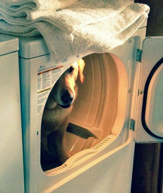 dog-hiding-spot