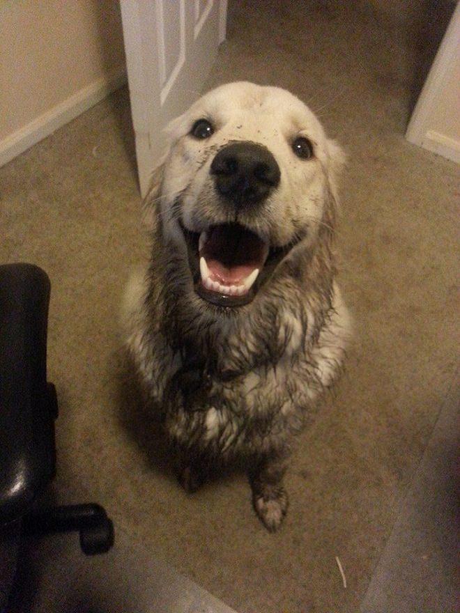 dog-in-mud
