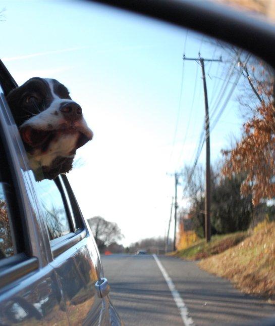 dog-in-the-mirror-car