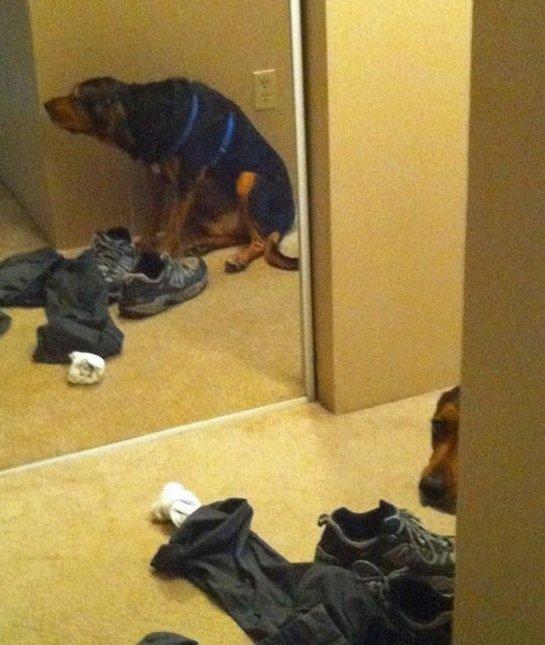 dog-mirror-hiding