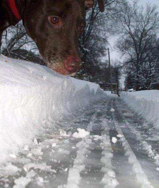 dog-photo-road