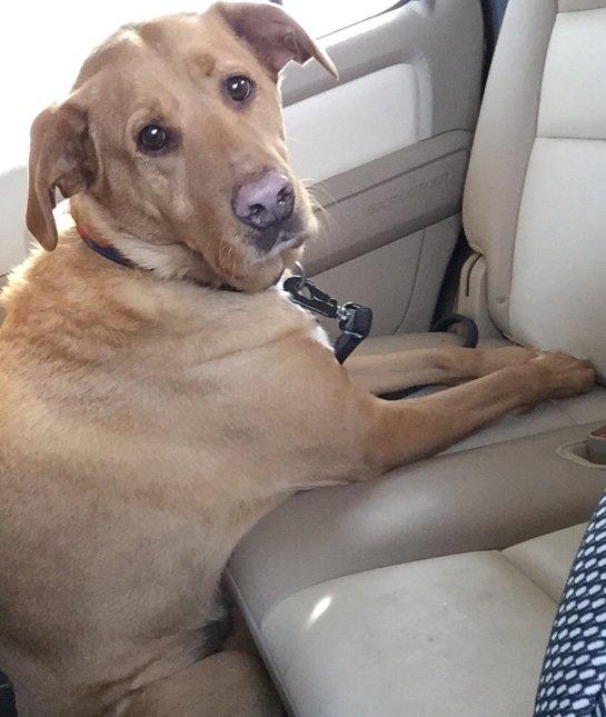 dog-sitting-funny-car