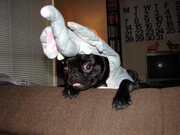 elephant-pug-dog
