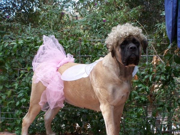 english-mastiff-style-halloween