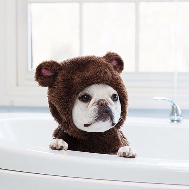 french-bulldog-bear-costume