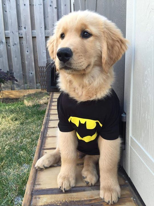 golden-retriever-puppy-costume
