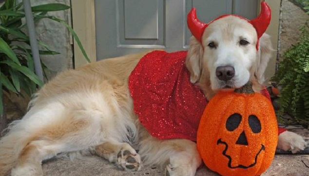 12 costumes that prove golden retrievers always win at halloween