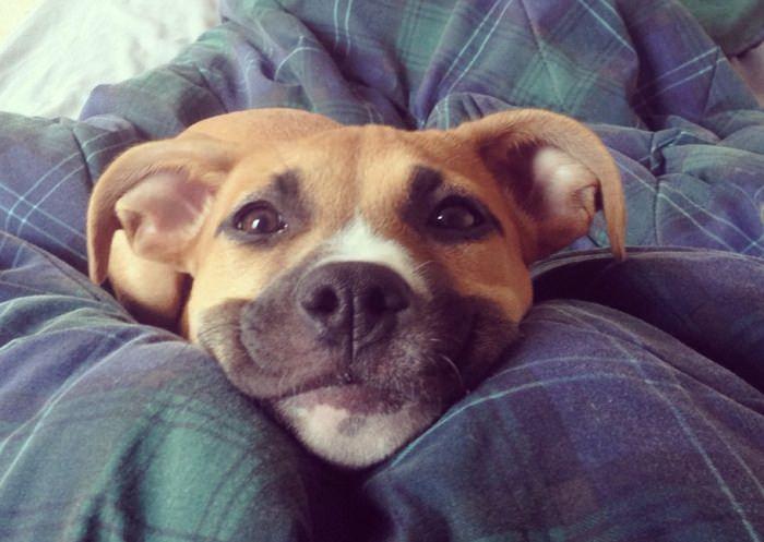 good-morning-dog