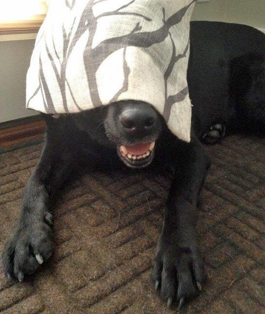 hiding-dog