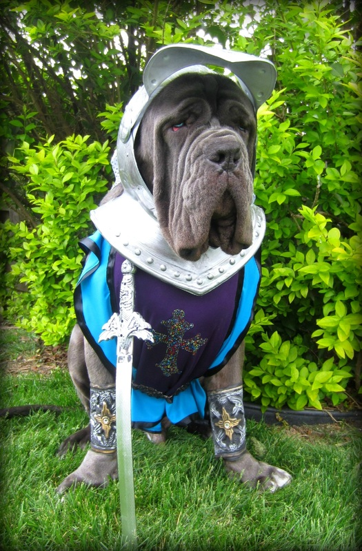 mastiff-costume-halloween-dog