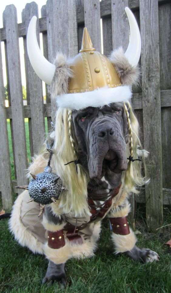 mastiff-halloween-costume