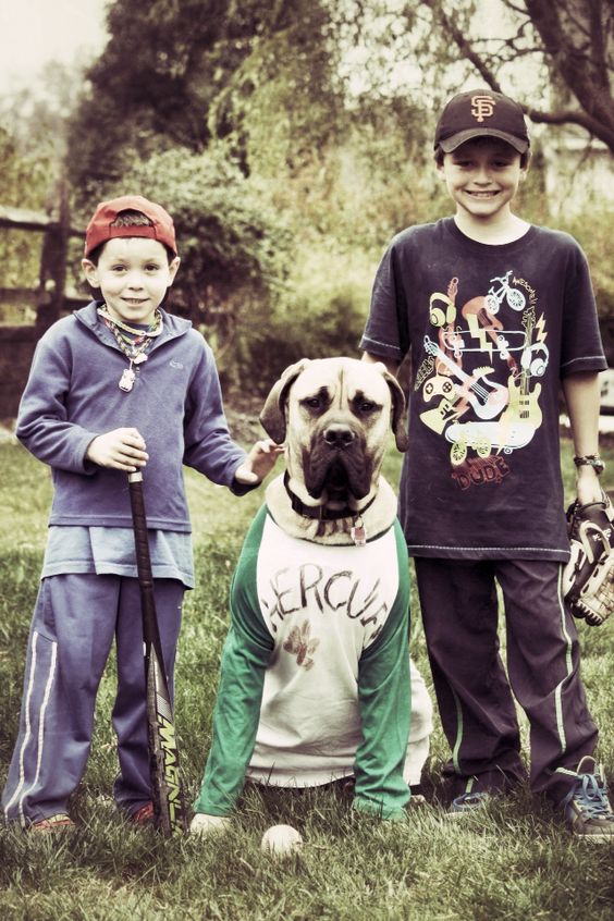 mastiffs-halloween-costume