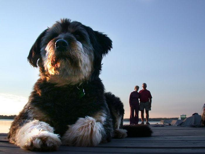optical-illusion-giant-dog-humans