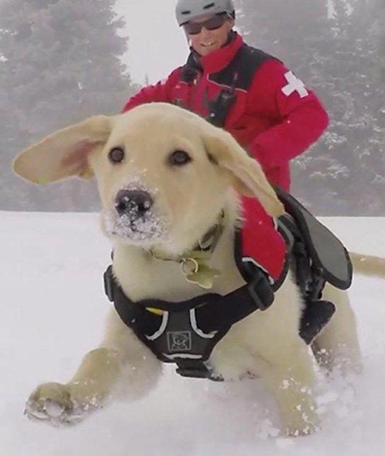 optical-illusion-giant-dog-rescue