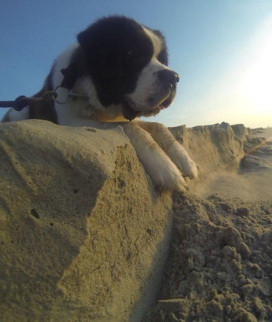 optical-illusion-giant-dog