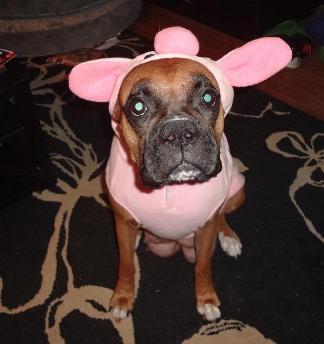piggy-boxer-halloween-costume