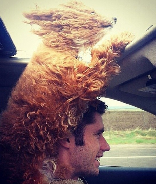 pooch-dog-car-wind