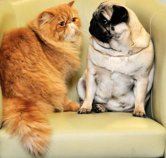 10 Reasons Why Cats Are Often Preferred Over Dogs 17