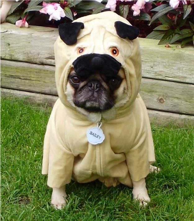 pug-costume-dog-style