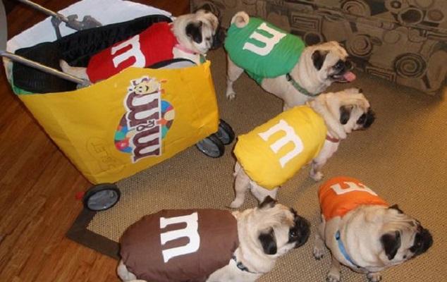 pug-halloween-dogs