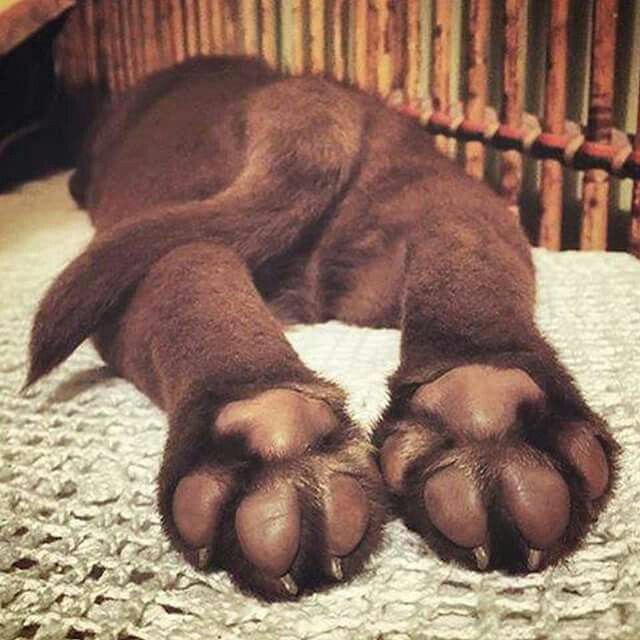 puppy-feet-close-up