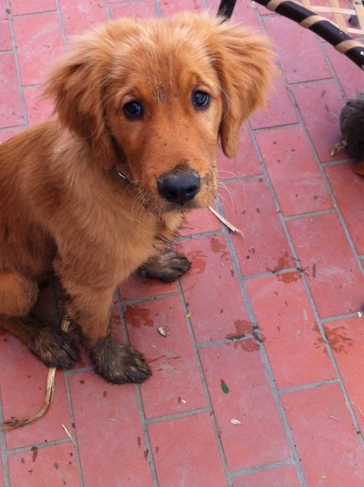 puppy-mud