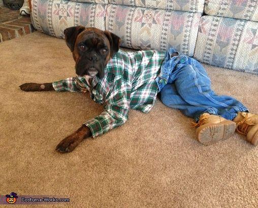 stylish-boxer-dog