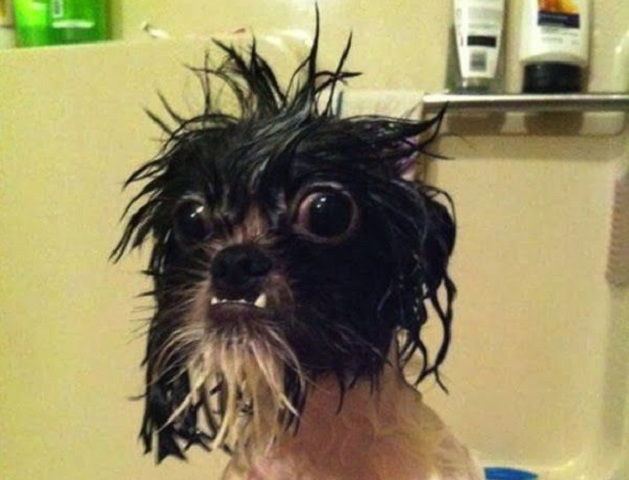 10 Dogs Who Hate Baths