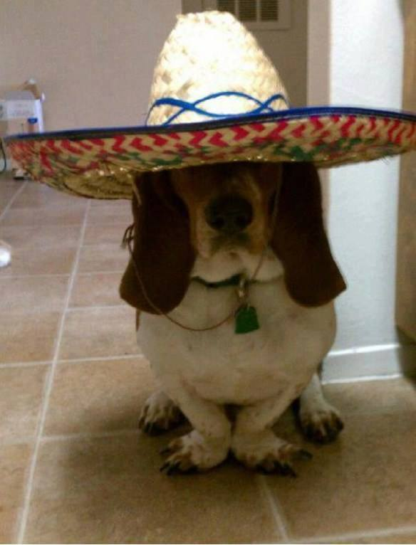 basset-hound-wearing-a-sombrero