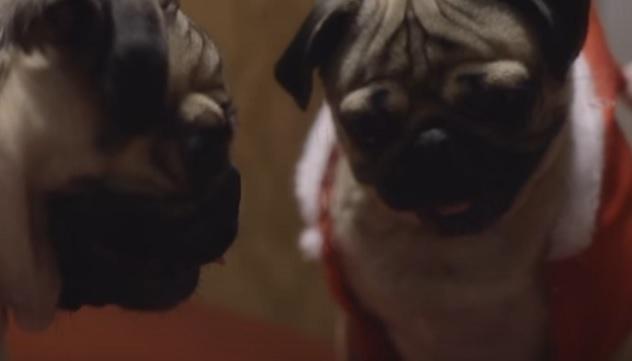 cute-pug-celebrity-happy-year