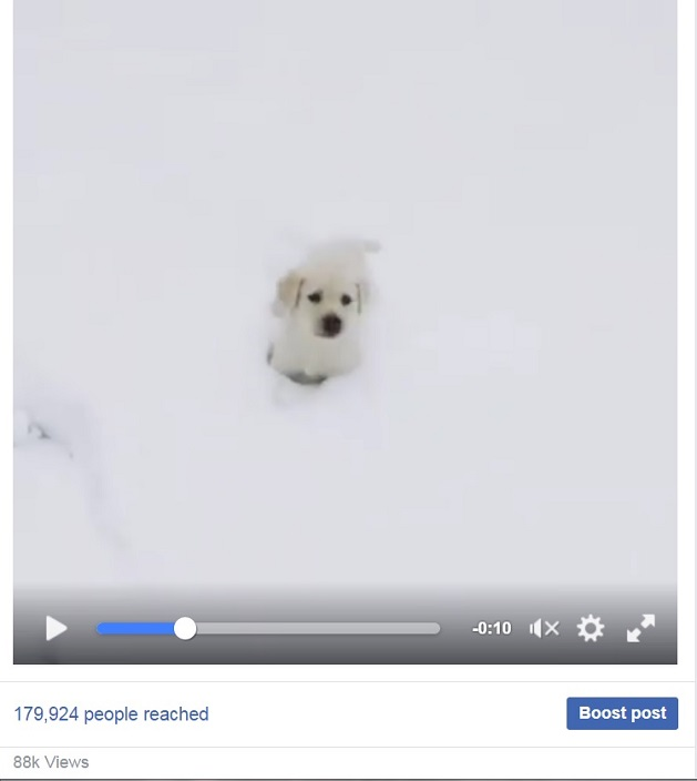 cute-puppy-dog-labrador