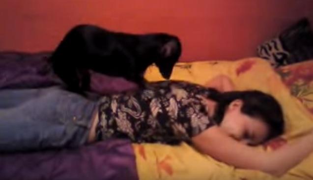 dachshund-massage-dog-treatment-woman