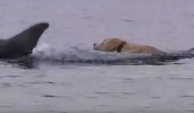 dolphin-labrador-friends