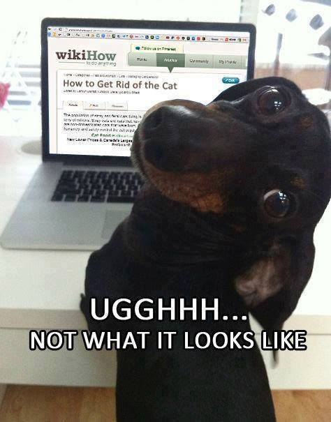 funny-doxie-pics-laptop