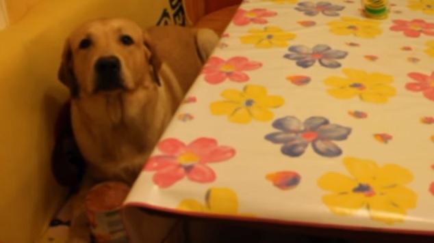 labrador-dog-kitchen-food