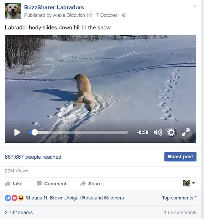 labrador-dog-snow-hill