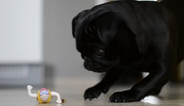 playful-black-pug-toy