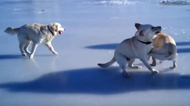playful-dogs-ice-frozen-lake