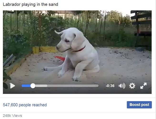 playful-labrador-pup-sand