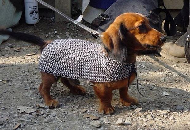 protect-your-wiener