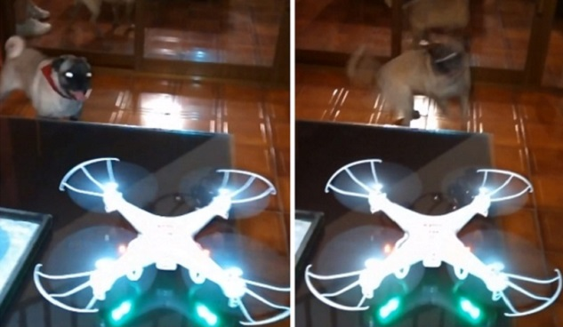 pug-drone-spinning-dog-funny
