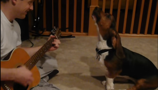 singing-funny-basset-hound