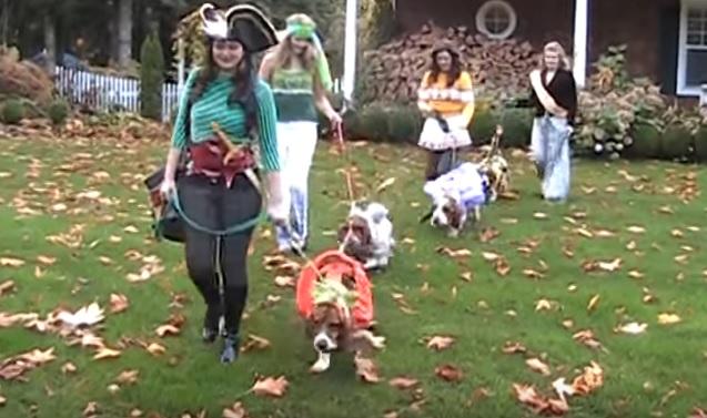 basset-hounds-on-halloween